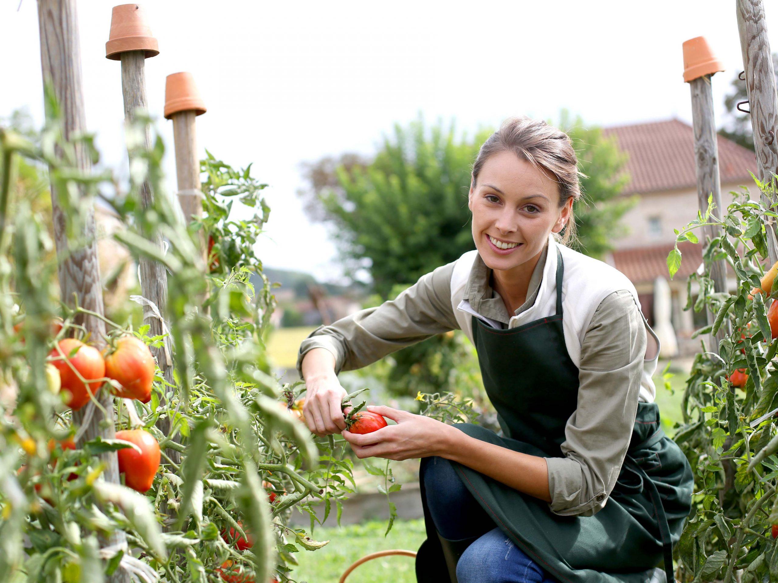 Kräuter, Obst & Gemüse