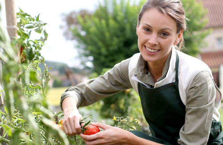 Veredeltes Gemüse